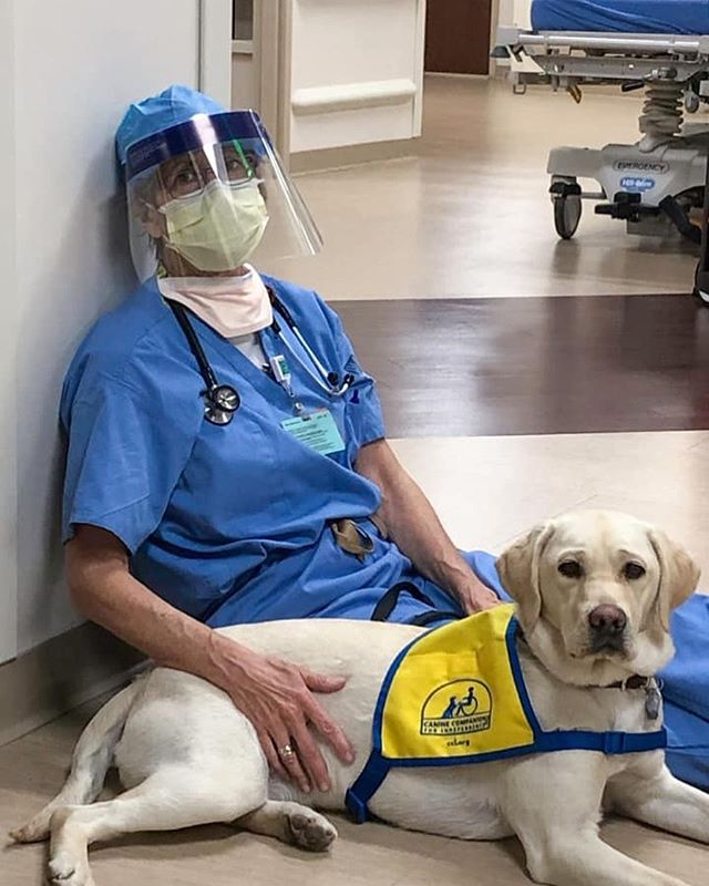 doctor in full gear petting an assistance dog