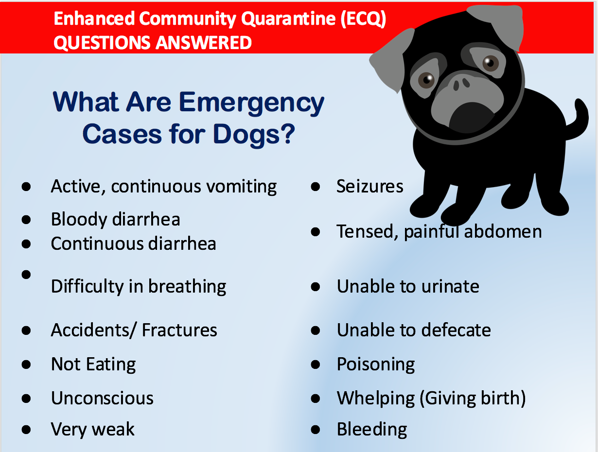 Emergency cases for pet dogs