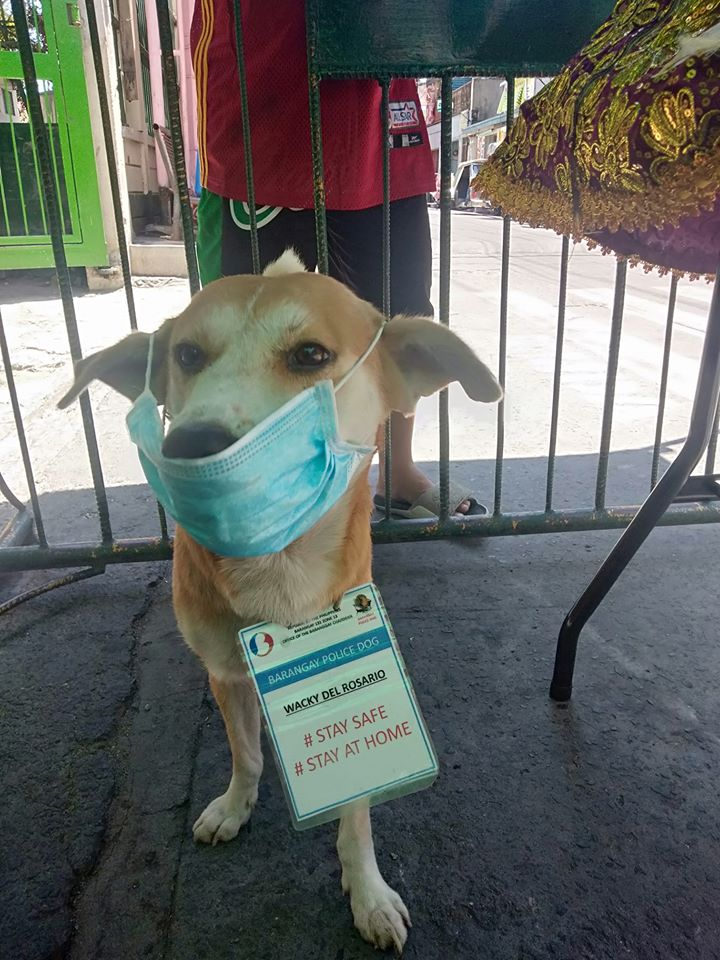 dog wearing a face mask and an ID