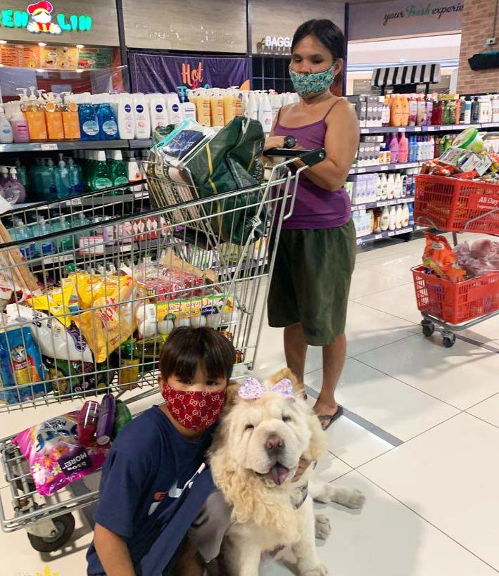 Mazikeen the Chow - Rondel being treated to a grocery shopping