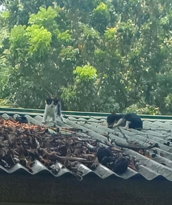 cat steals guard's lunch - cats on roof