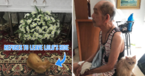 Cat Walks 5 Blocks To Attend The Wake Of The Lolo Who Used To Share His Burgers With Him