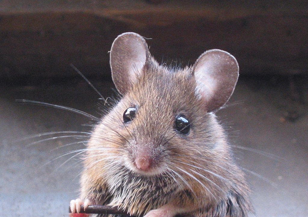 Woman Bacolod missing money - mouse