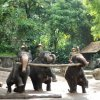 Elephants at Work