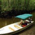 Kuala Sepetang Recreational Forest - Matang