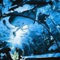 Underwater World Sentosa
