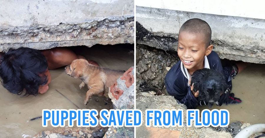 puppies saved from flood