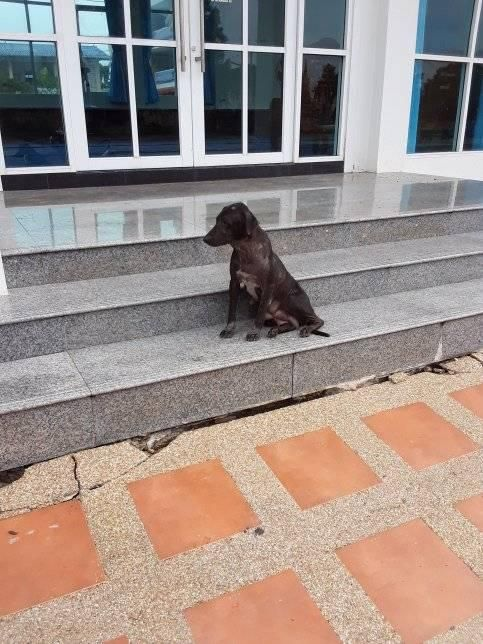 the mother dog wait for chilfren