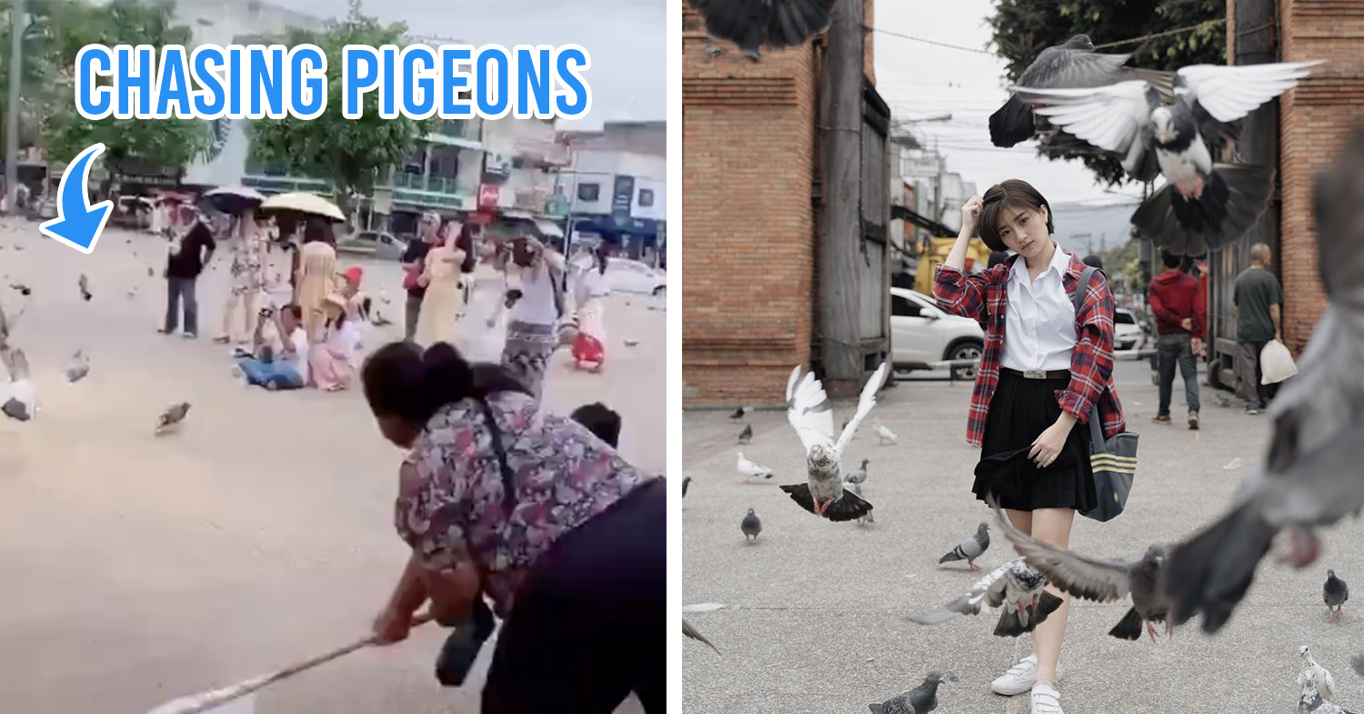chasing pigeons cover image