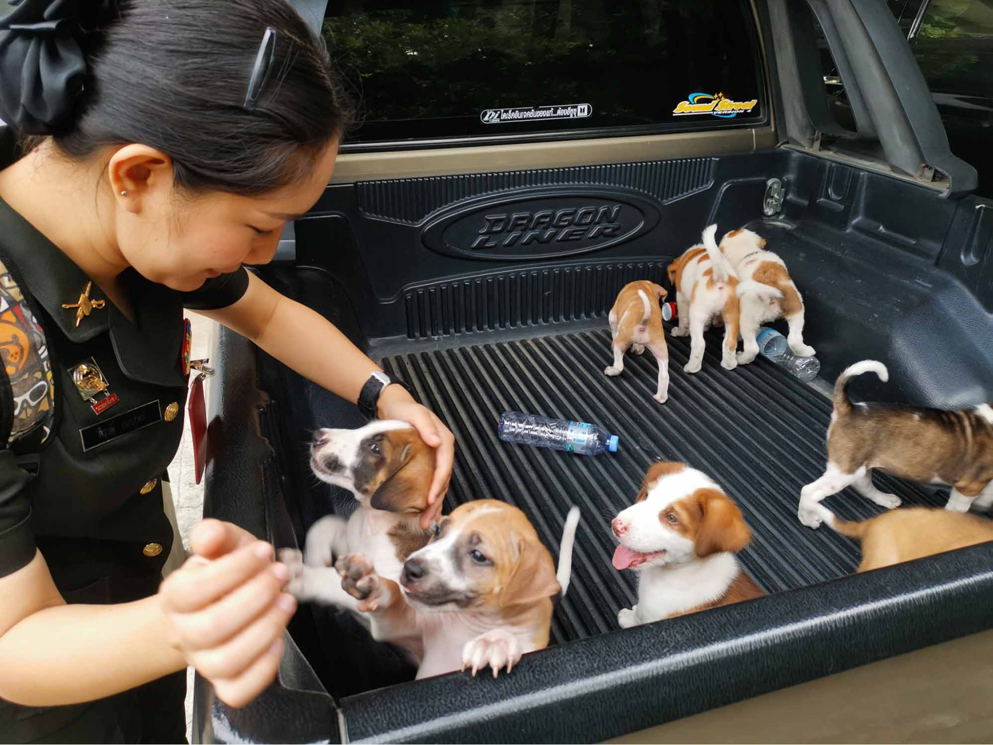 Man Rescues Puppies