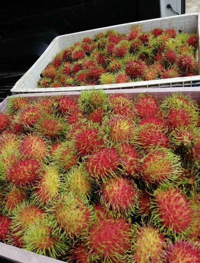 Free fruits for people in Thailand
