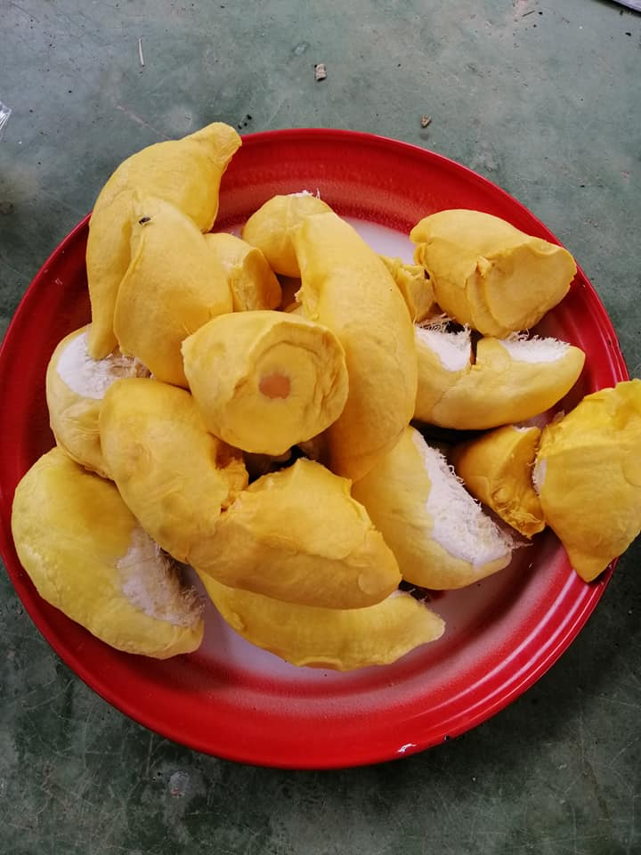 Thai lady gives free durian to a sharing pantry