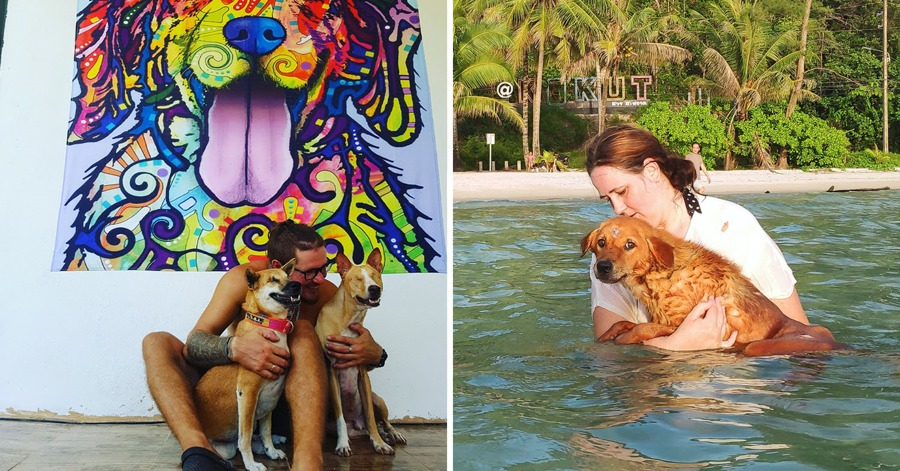 Couple Moves To Island In Thailand To Care For Injured And Disabled Dogs