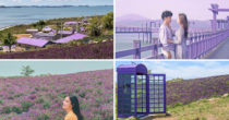 "South Korea's ""Magical"" IG-Worthy Purple Island Has A Dark History Not Known To Many"
