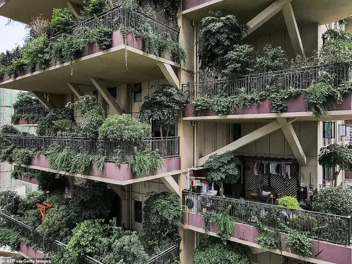 Forest Apartment in China