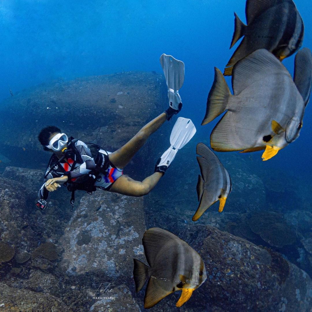 diver with batfish