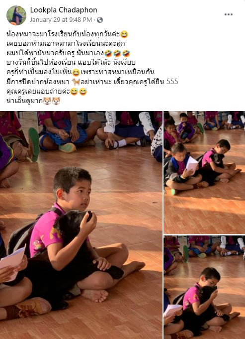 Stray Doggo Won't Stop Following Thai Boy, Even Goes To School With Him