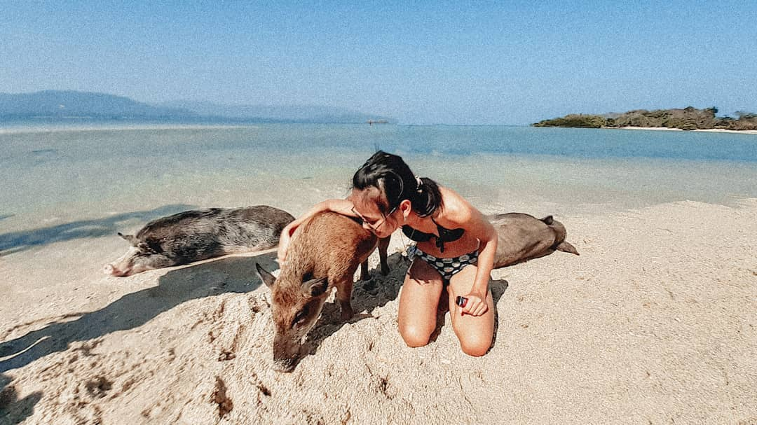 Koh Matsum Is A Little Known Island Off Koh Samui Where You Can Swim With Piglets