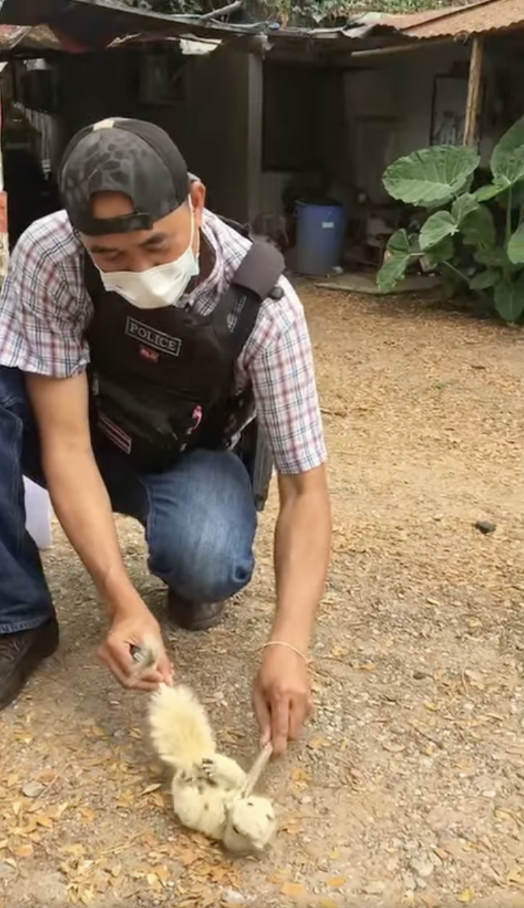 Thai Police Officer Performs CPR To Save Electrocuted Squirrel