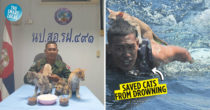Buff Navy Guard Stops Operations & Saved Four Kittens From Drowning In Koh Adang