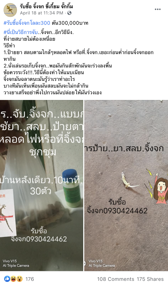 "Thai Man Buys ""Unwanted"" Geckos From People Full-time, Is The Pest Superhero We All Need"