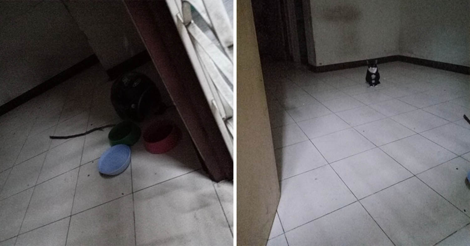 Owner Abandons Pet Cats After Moving Houses, Left Them Behind With Just Food & Water