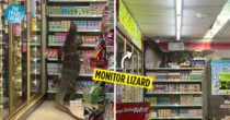 "Monitor Lizard Goes ""Shopping"" At Thai 7-11, Doesn't Need Help Reaching High Shelves"
