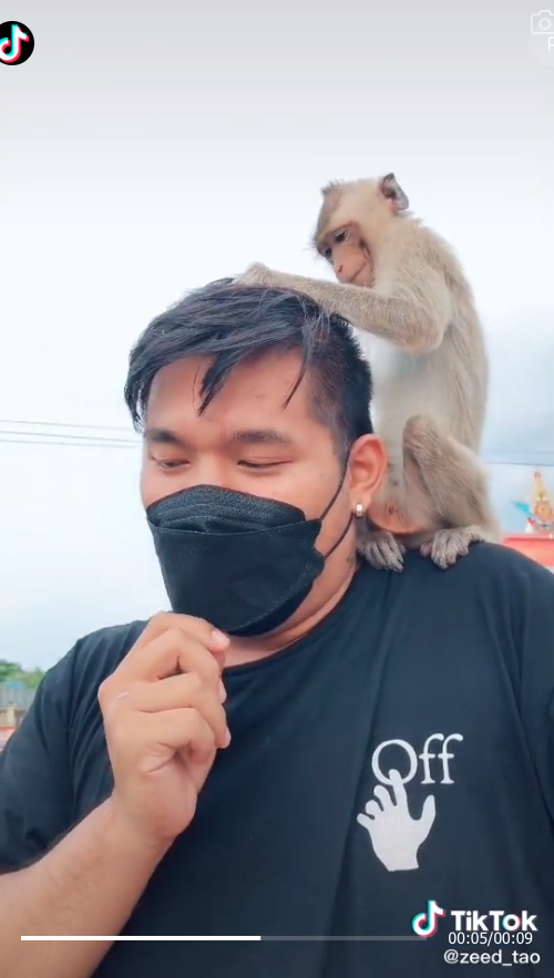 Caring-monkey-grooms