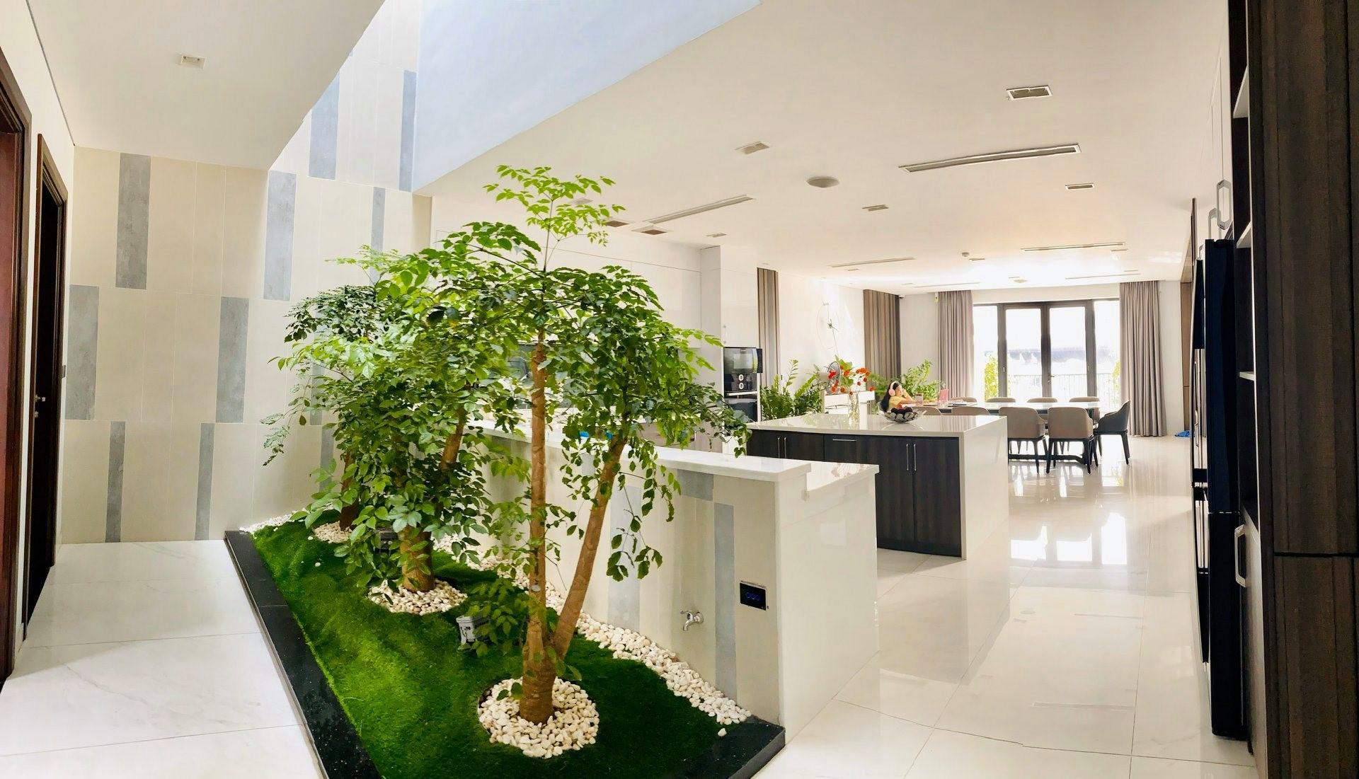 atrium plants