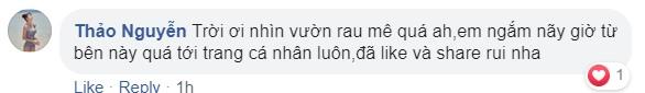 Vietnamese indoor garden comment