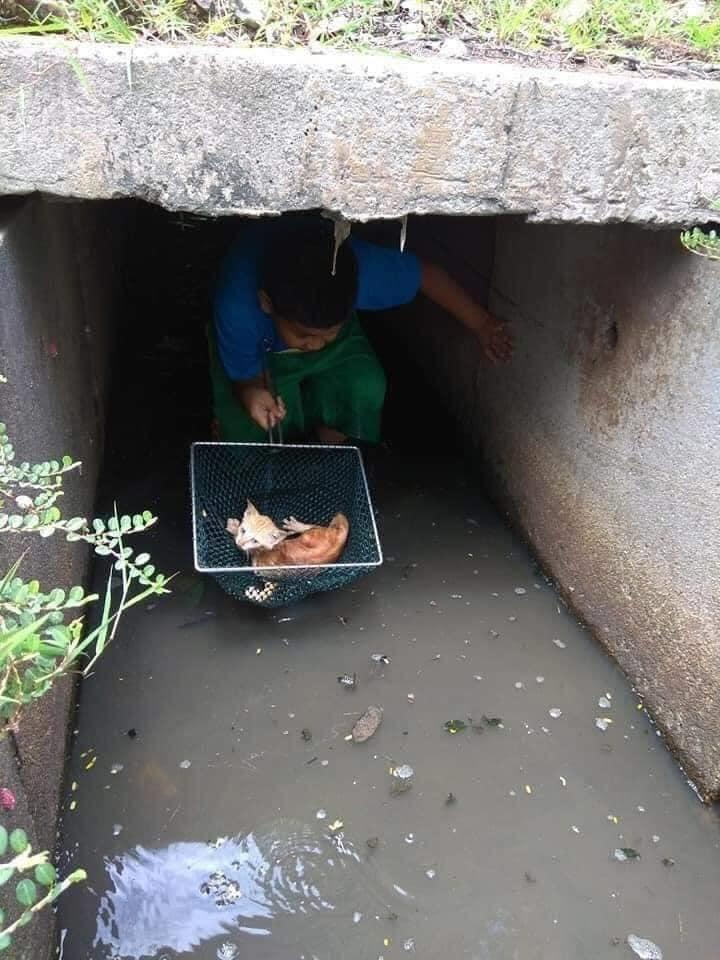 vietnamese boy rescue kitten