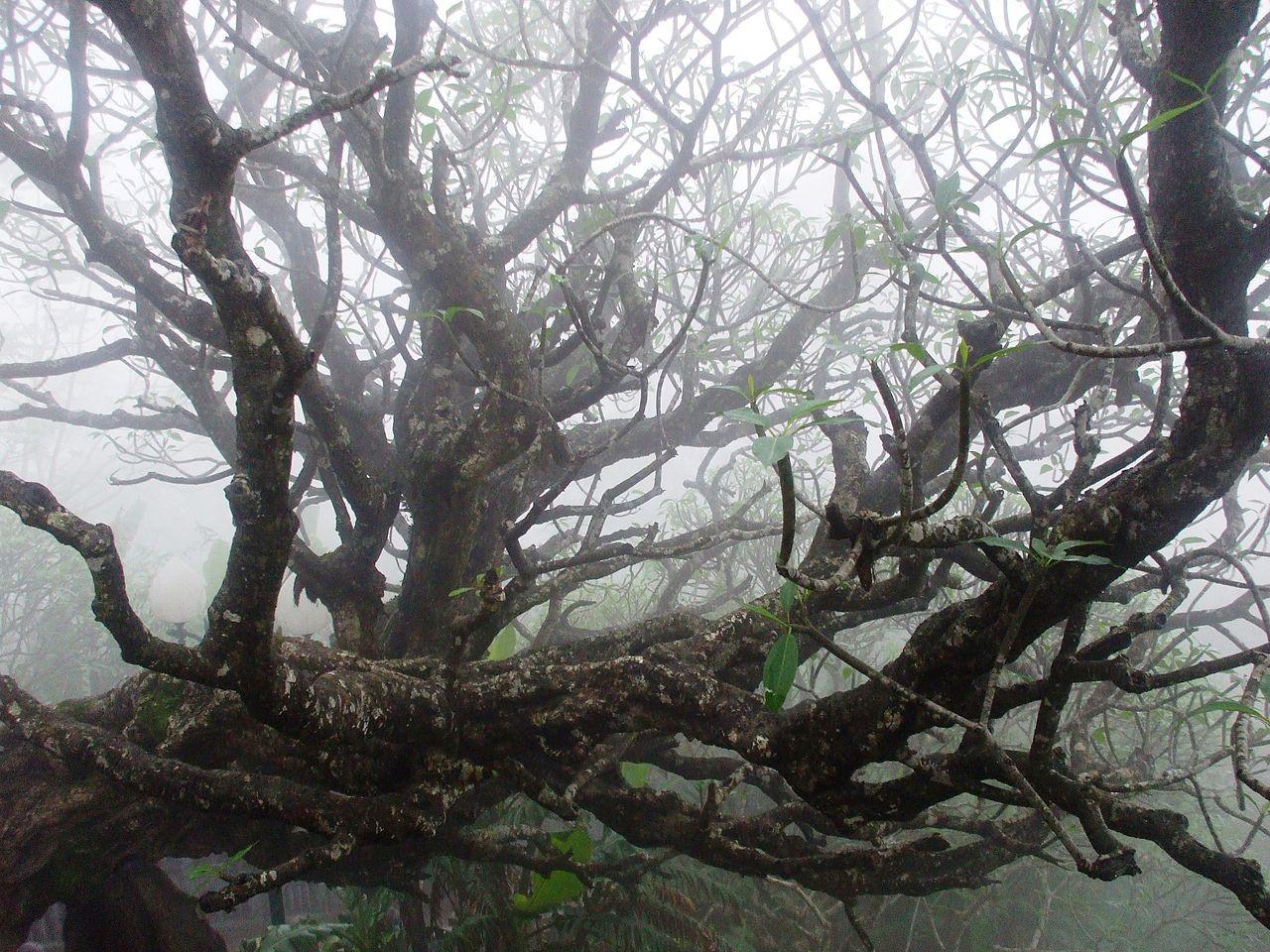 Vietnam natural landscape_Yen Tu Mountain