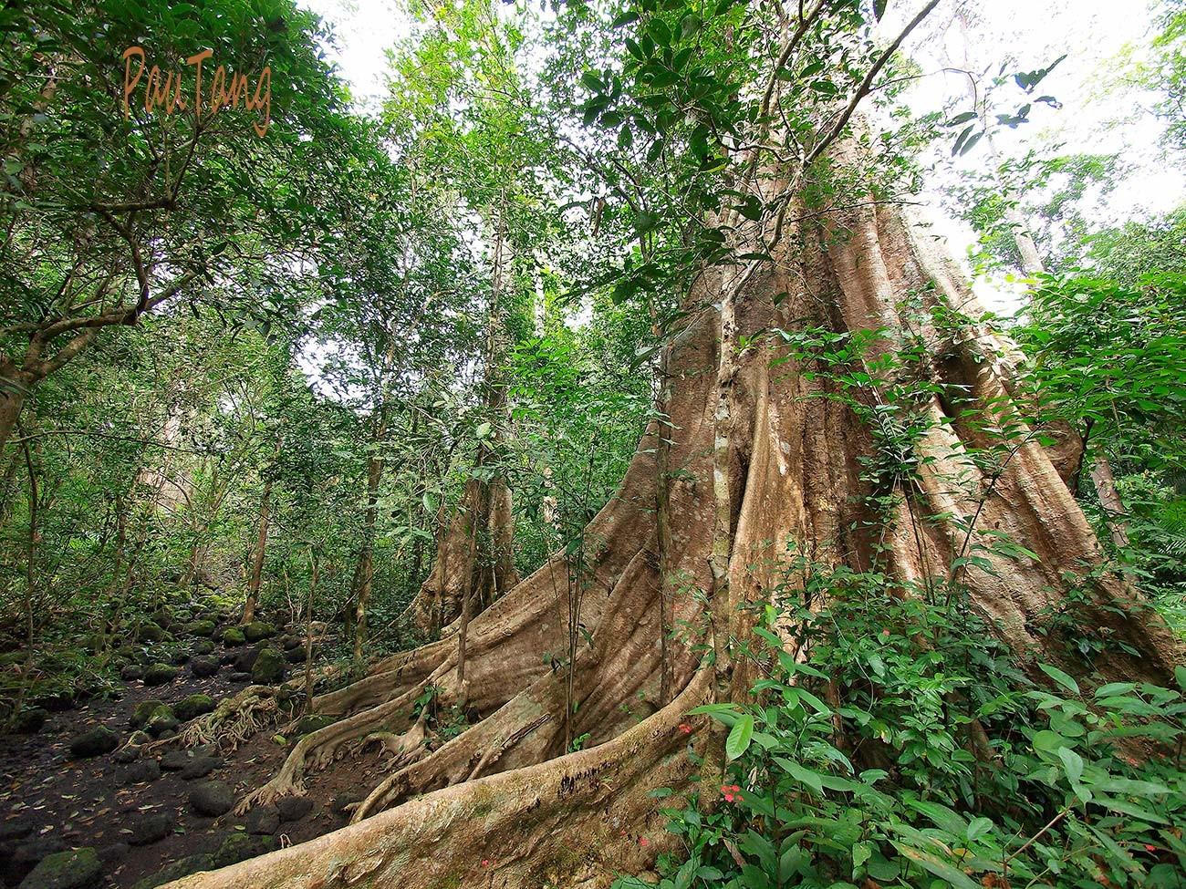 Vietnam natural landscape_Nam Cat Tiennational park