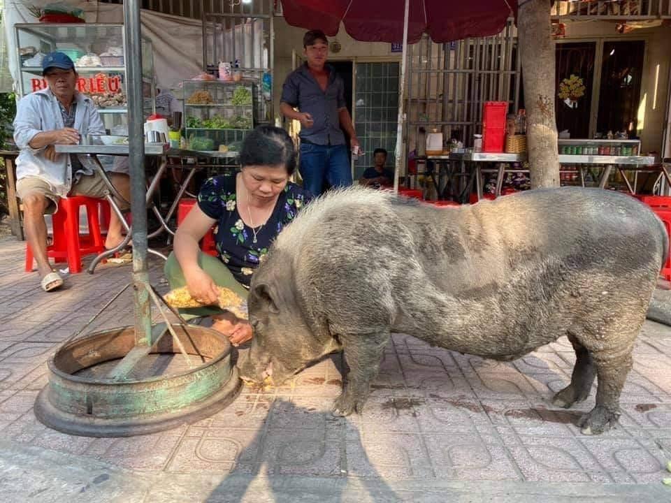 chonky pig_eat vegan food