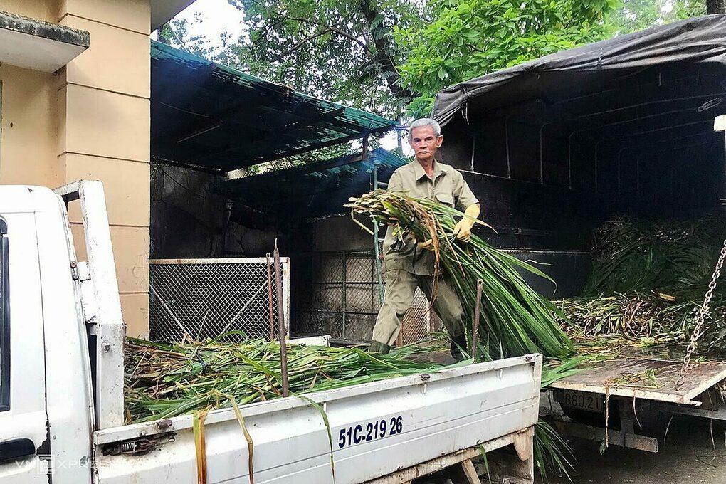 Saigon Zoo_elephant food