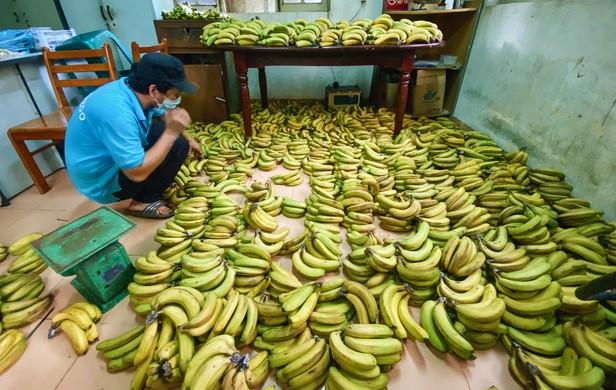 Saigon Zoo_food donations