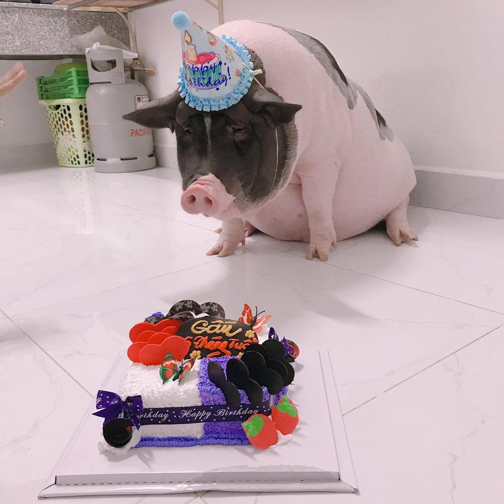 chonky pig_pet pig birthday
