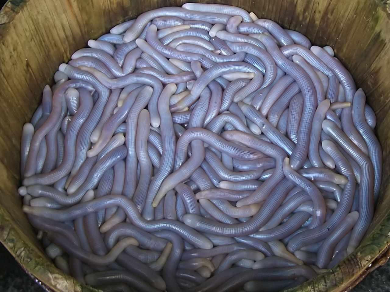weird vietnamese foods - living sá sùng