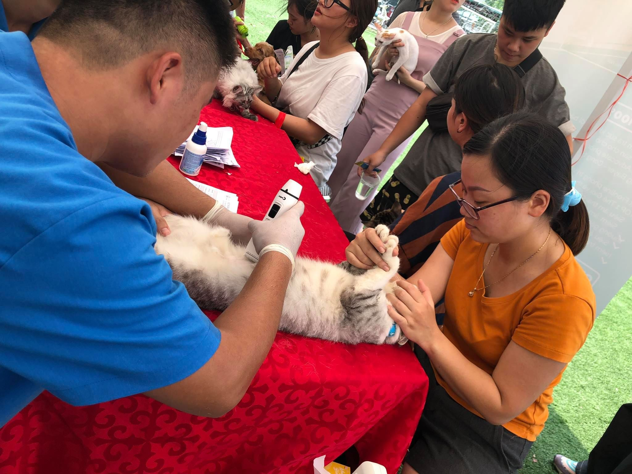 hanoi things to do october - free pet health check