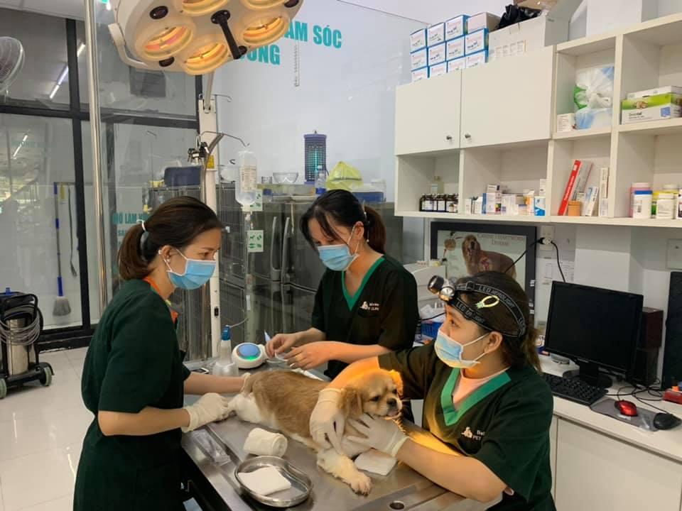 Saigon vet clinics_belwee
