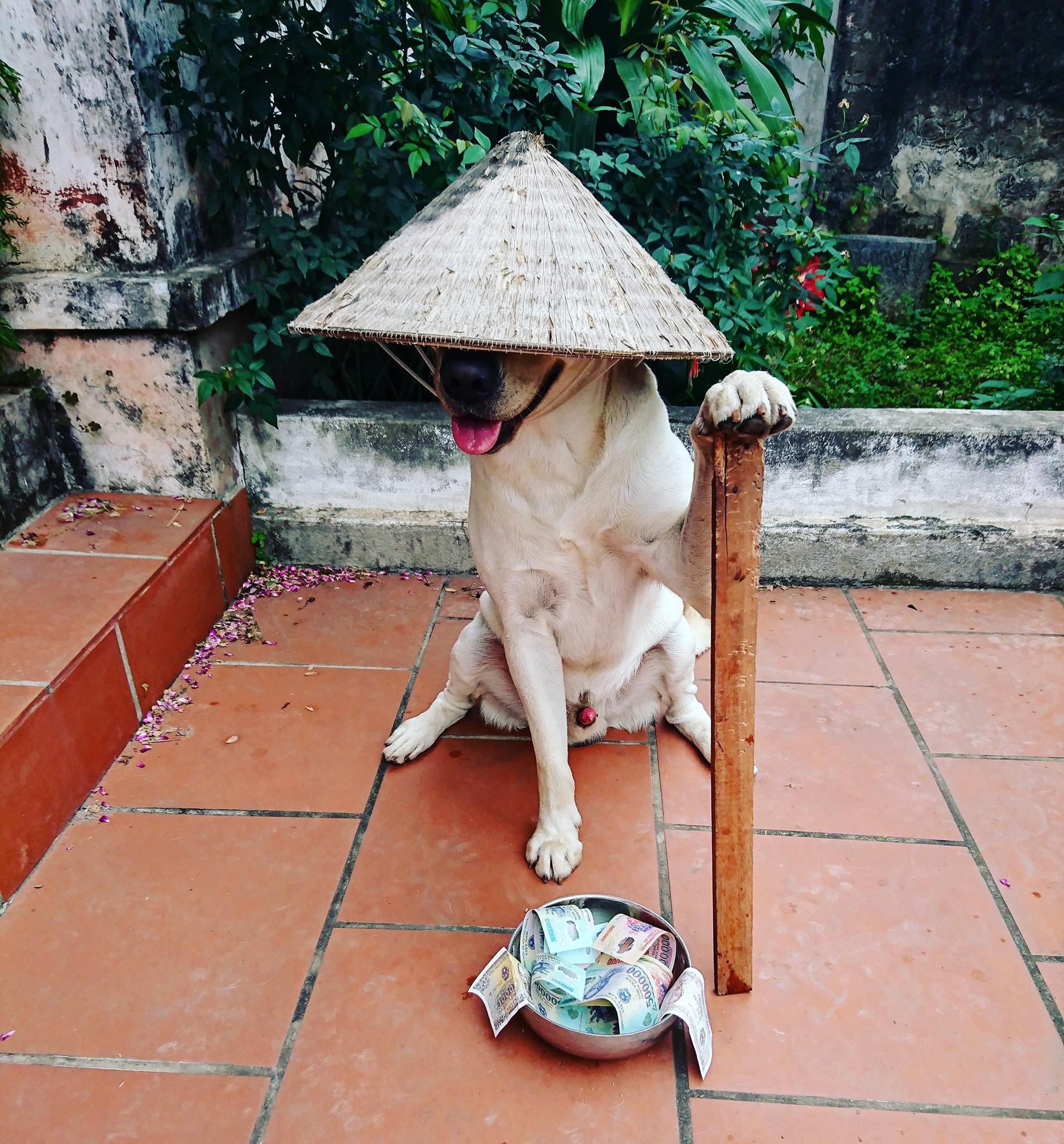 Vietnamese urban legends - dog wearing hat