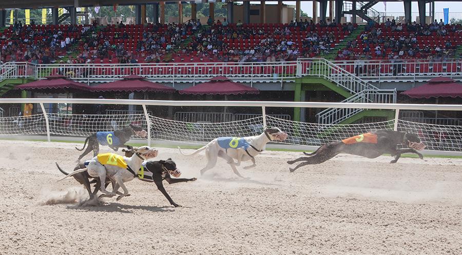 dai nam dog racing