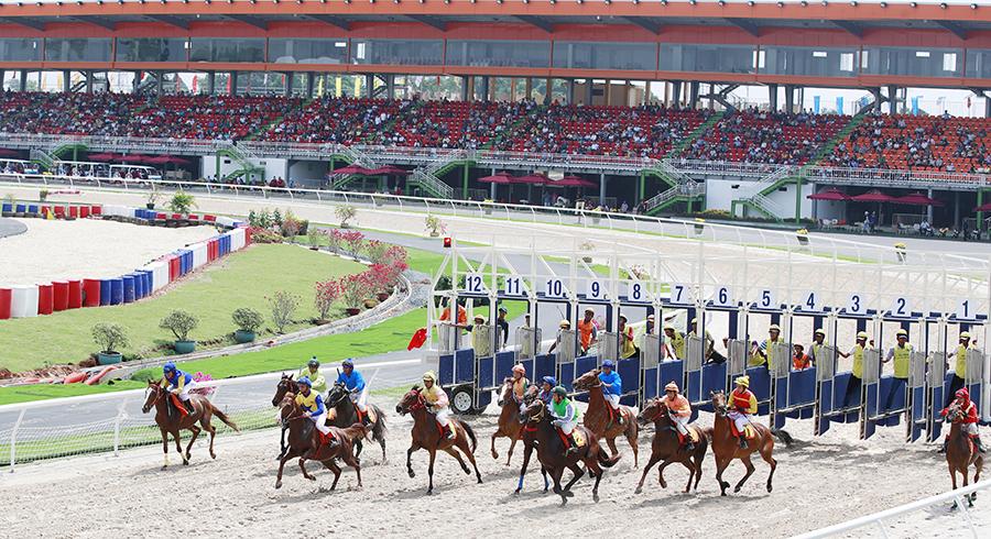 dai nam horse racing