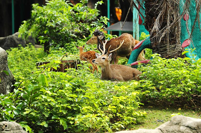 dai nam open zoo