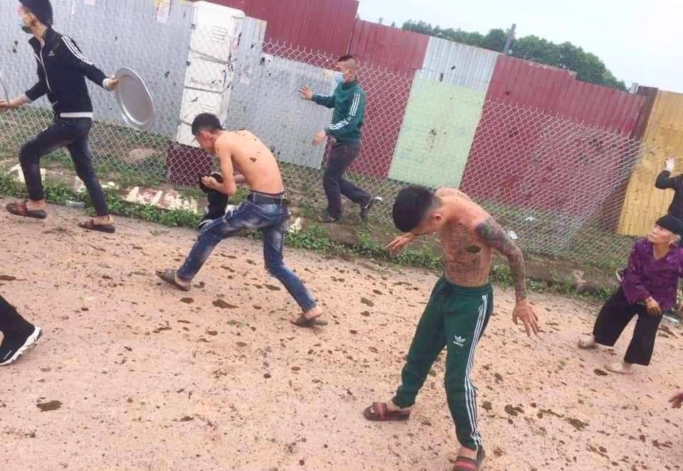 buffalo poops fight