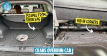 Man Buys Crabs, Crabs Break Free, Overrun His Car, Probably Still Got Eaten