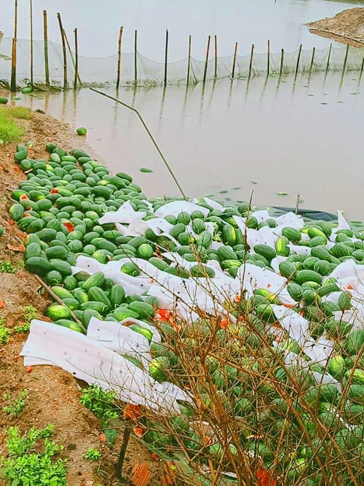 watermelon truck flip