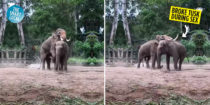 Saigon Zoo Elephant Breaks Tusk During Sex, Broken Ivory Kept For Museum Display