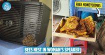 Bees Nest In Woman's Karaoke Speaker, She Lets Them Be & Now Sells Honey