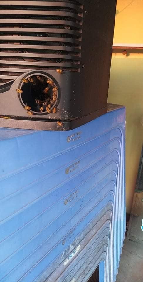 bee hive speaker